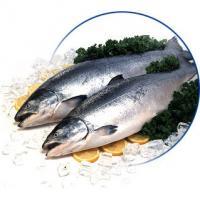 Свежемороженая рыба – форель, семга